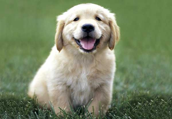 Pics Of Puppies. Puppies learn through play