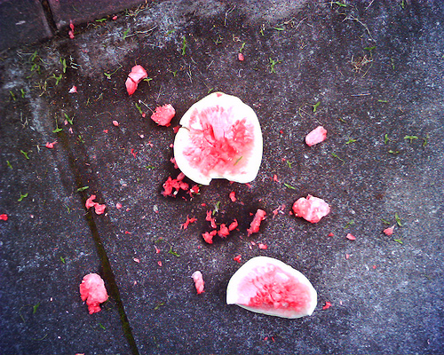 smashed-watermelon.jpg